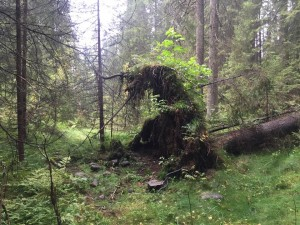 """Her er ett bilde av ett """"Troll"""" som ble funnet på en tur i Nordmarka"""