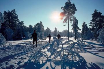 686-nordic-skiers-by-odd-stiansen-visitoslo-95911