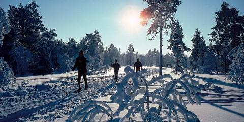 686-nordic-skiers-by-odd-stiansen-visitoslo-95911